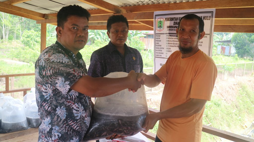 """Kelompok Budidaya Ikan """"Amanah"""" Terima Bantuan  Ikan Lele"""