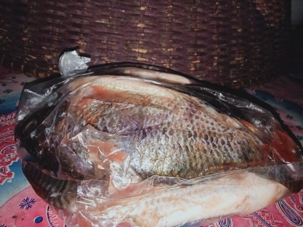 Menjala Ikan Masih Menjadi Mata Pencaharian Masyarakat Pesisir Kapuas