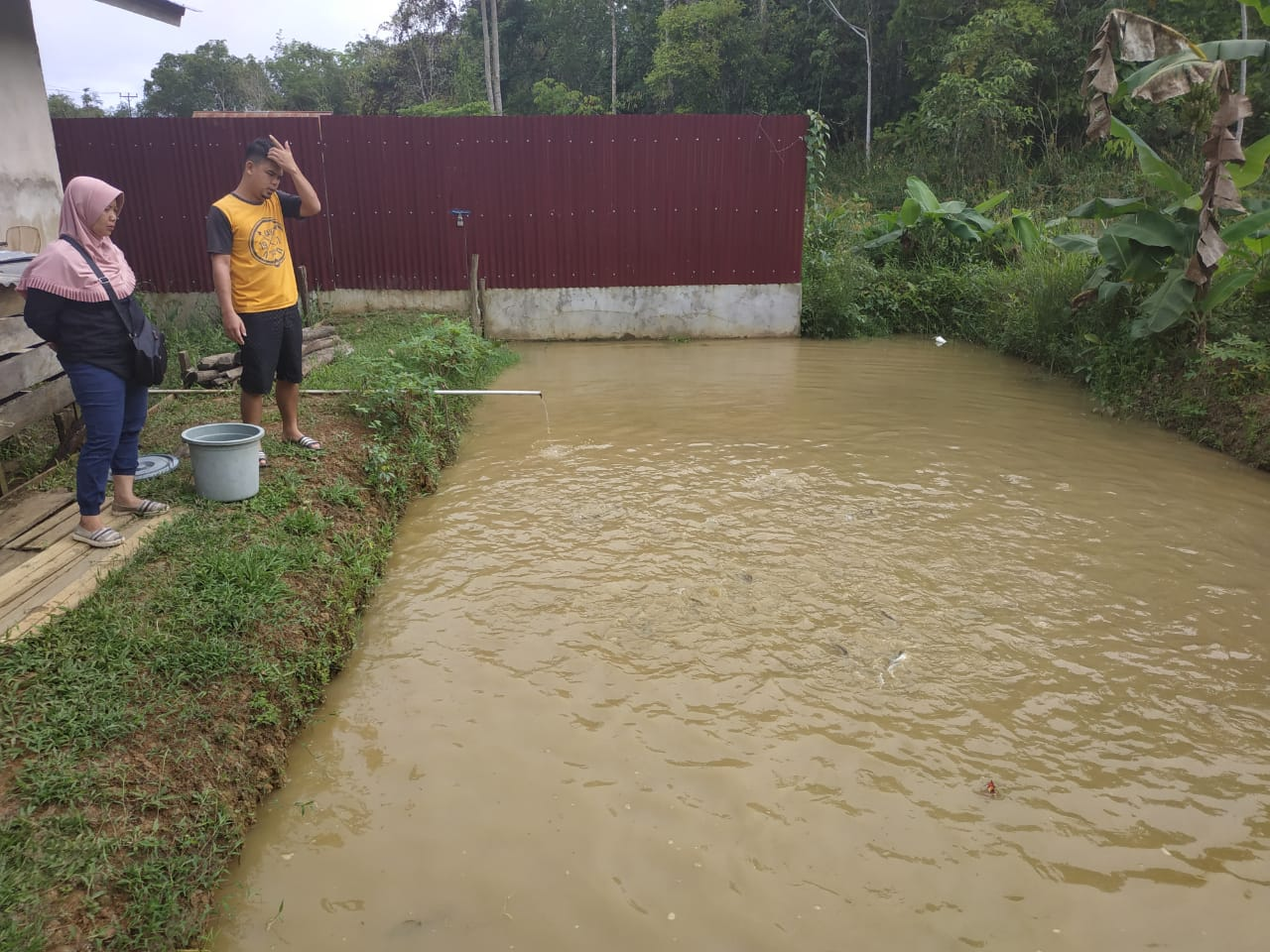 Dinas Perikanan Monitoring Kolam Percontohan Patin di Desa Tekalong Kecamatan Mentebah